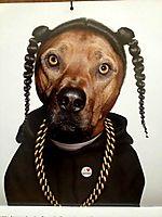 Snoop Dogg As A Dog Art Rap Portrait - The PHAG Shop